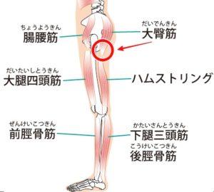 太 腿 付け根 痛み